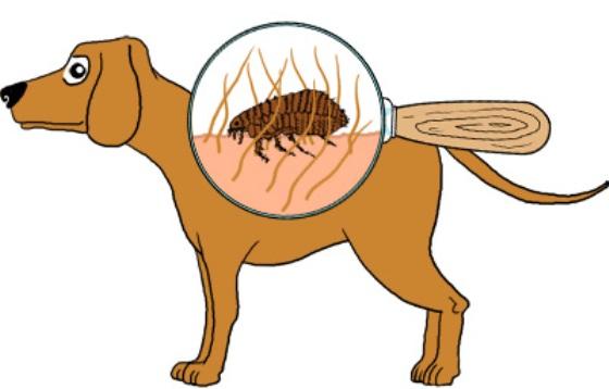 Bọ chét ở chó có màu giống với màu lông chó