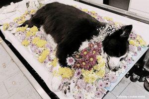 Dịch vụ hỏa táng chó của bệnh viện thú y Dreampet