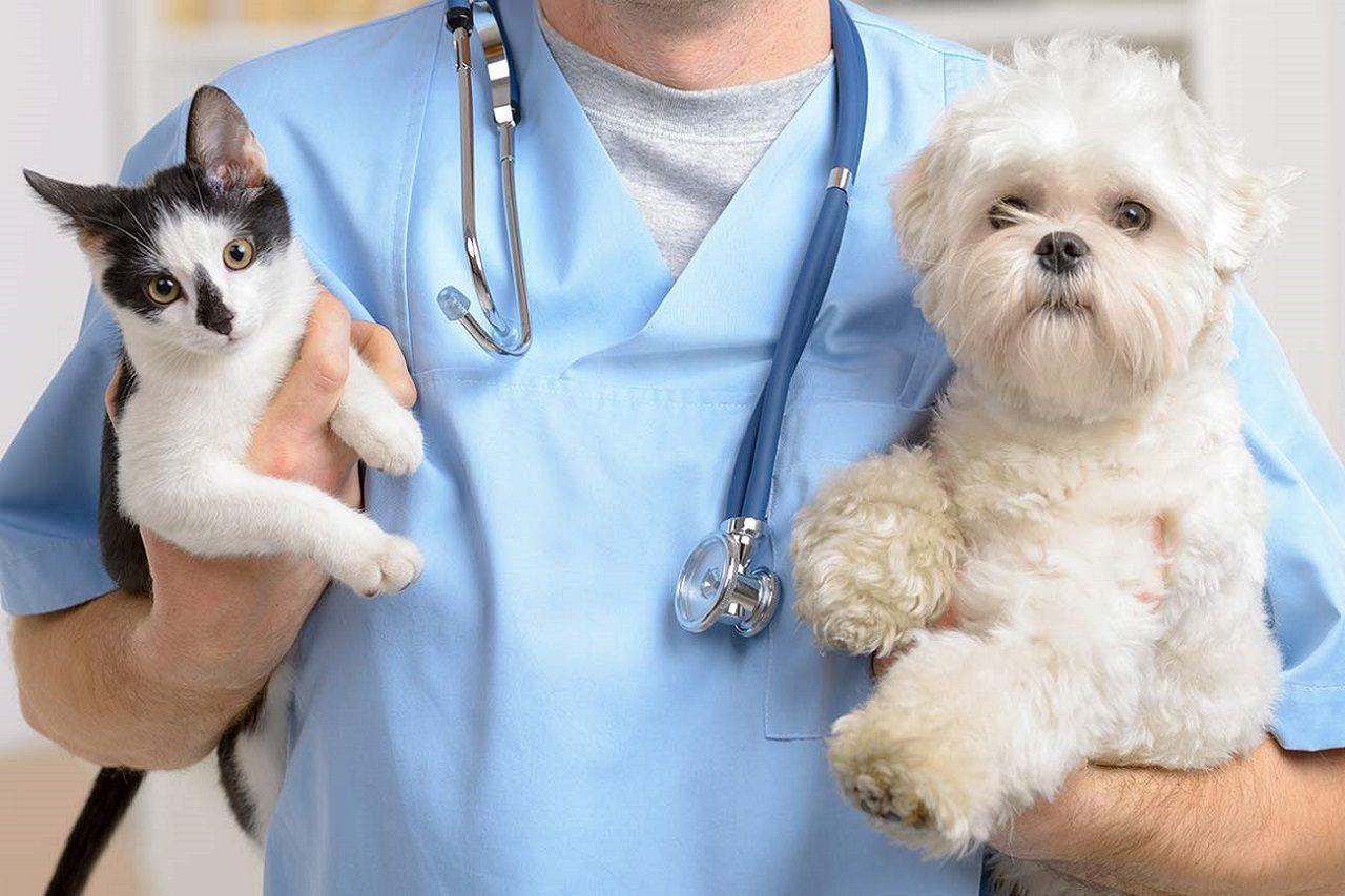 bác sĩ thú y quận hai bà trưng