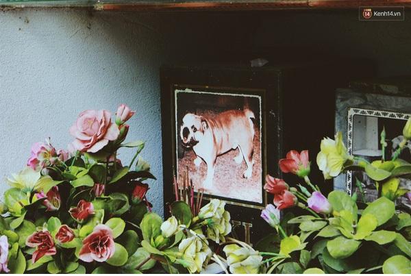 Chôn cất chó mèo quận Bắc Từ Liêm