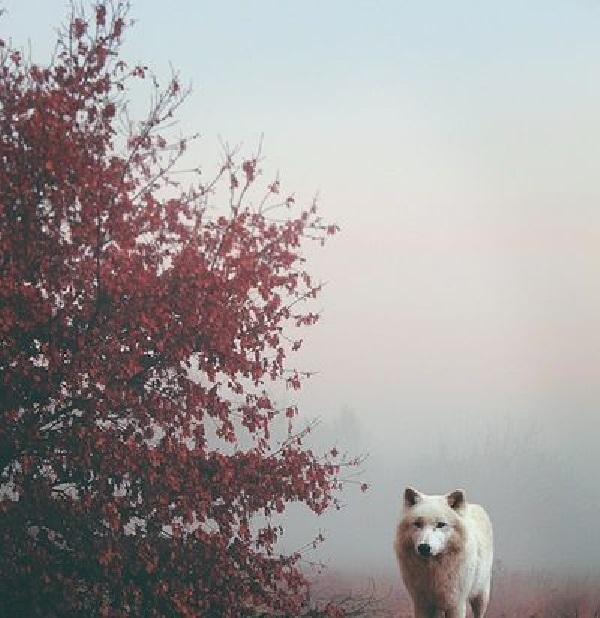 Quan niệm chó mèo có linh hồn