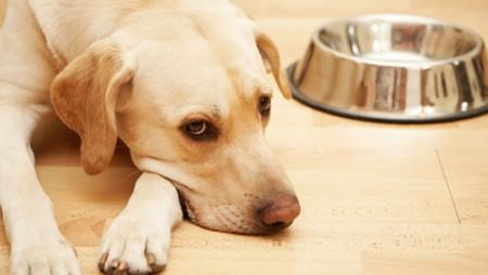 Nguyên nhân gây bệnh viêm dạ dày, đường ruột ở chó