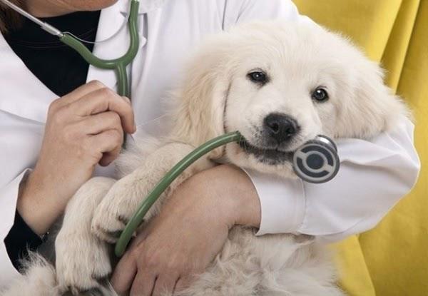 lựa chọn bác sĩ thú y tốt